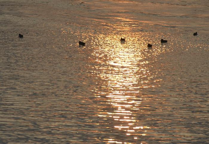 朝陽と鴨-2