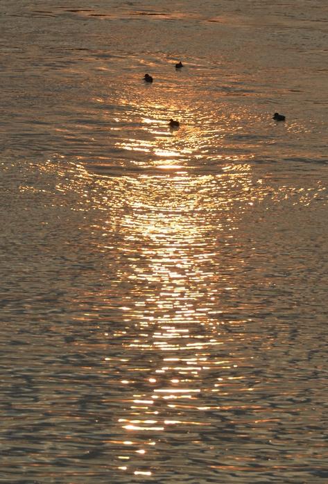 朝陽と鴨-3