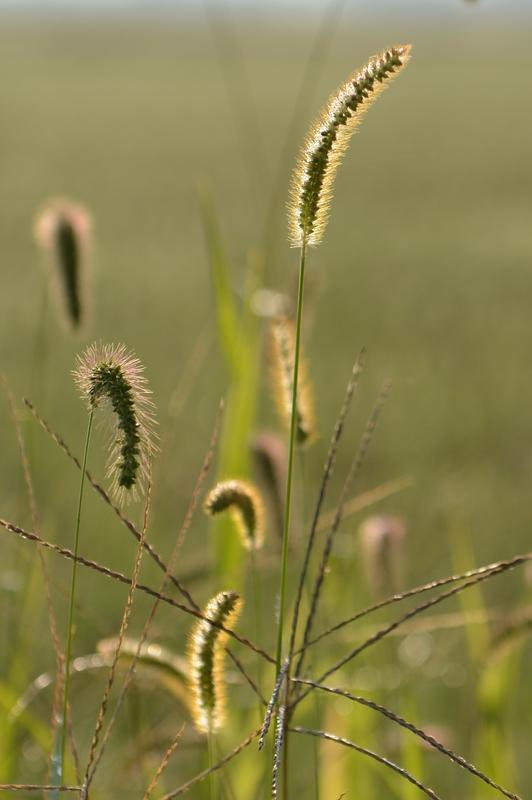 朝の草-2