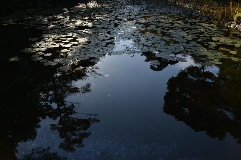 蓮のある池  秋-2