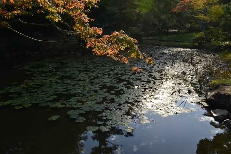 蓮のある池  秋-3