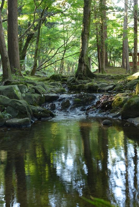公園の小川-2