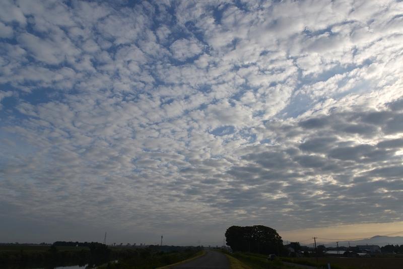 秋の空 朝のウロコ雲-1