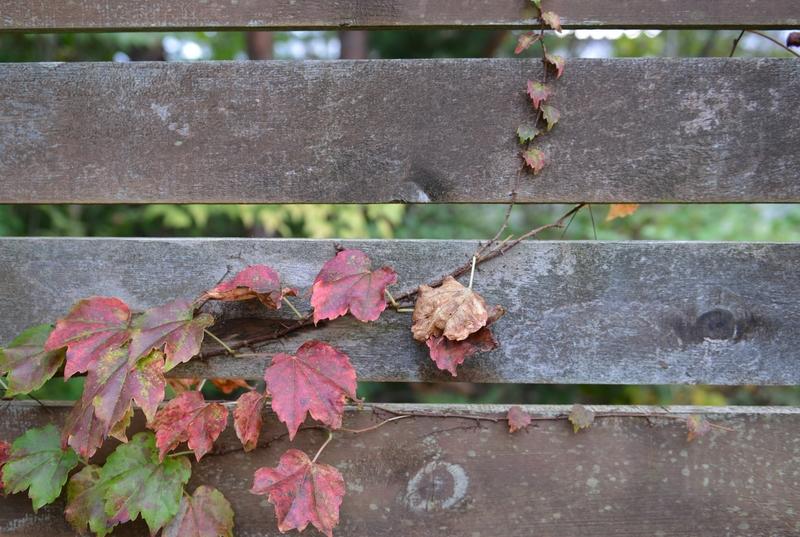 小さい秋-1