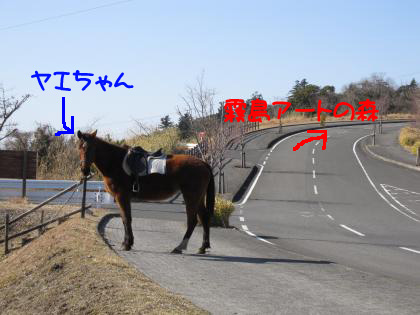 IMG_8592_convert_20110305165751.jpg