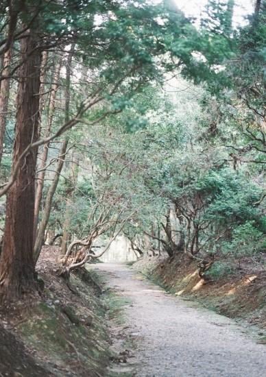 緑に覆われた道