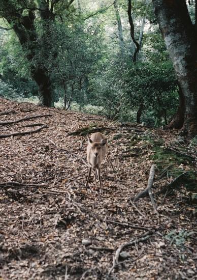 最後に会った鹿さん