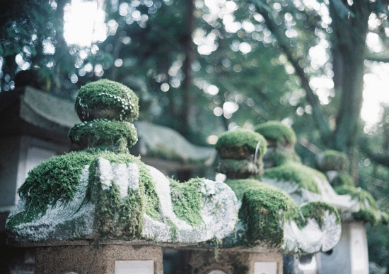 素敵な苔♪