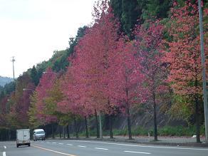 仙台村田線1
