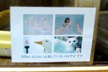 コピー ~ 022