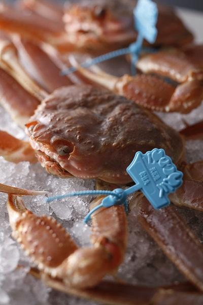 浜坂タグ付き生松葉蟹400