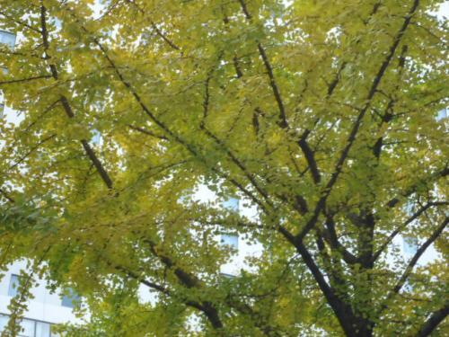 012_convert_20121119221048.jpg