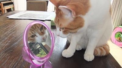 DSCF2461甘ったれ猫とつめたい猫
