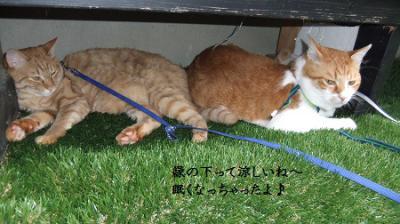 縁の下の猫たち