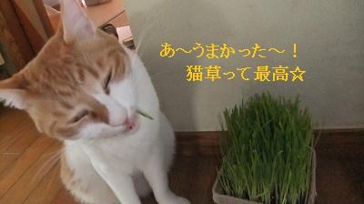 みゅう猫草3