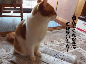 みゅう新聞2