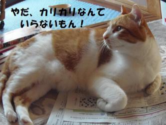 みゅう新聞3