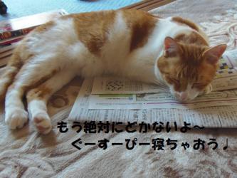 みゅう新聞4