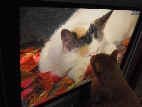 テレビの中の猫とチビ3