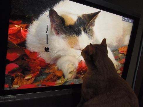 テレビの中の猫とチビ4