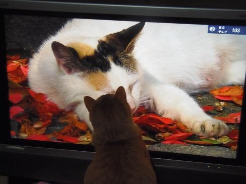 テレビの中の猫とチビ6