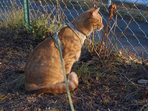 冬の陽だまりの猫3