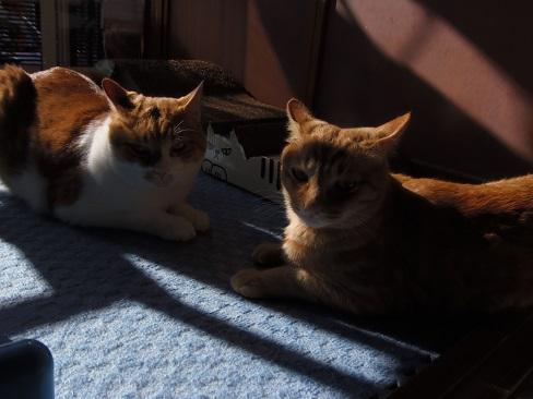 冬の陽だまりの猫4