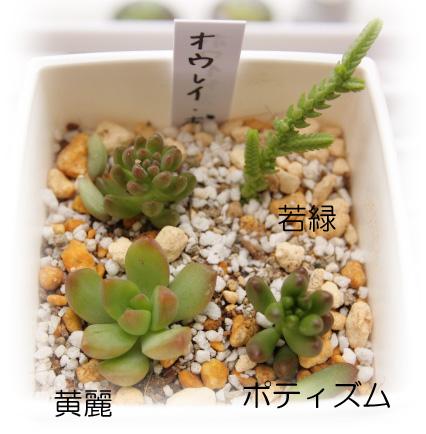 黄麗・若緑20120714