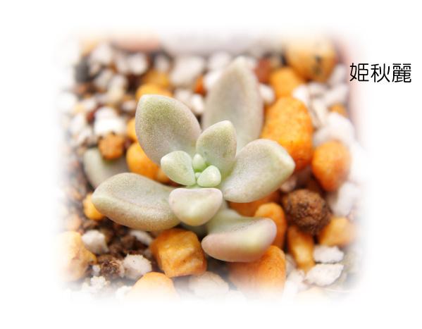 姫秋麗20120714