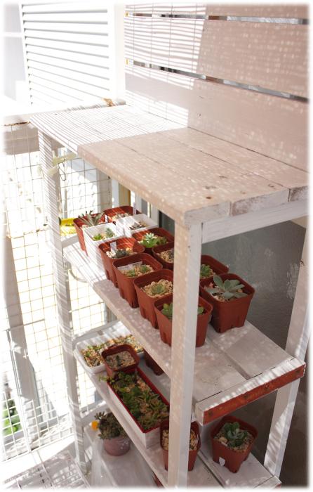 20120912多肉棚[1]