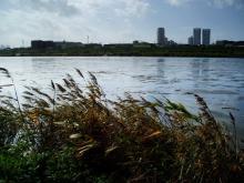 多摩川101203_2