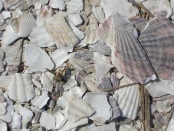 貝殻ロード