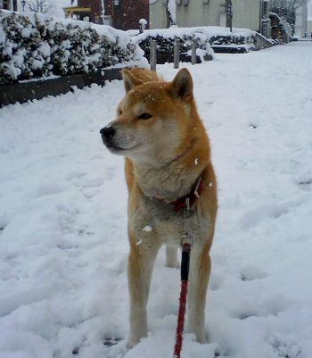トチ雪2011.1