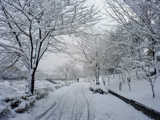 2011.1雪1