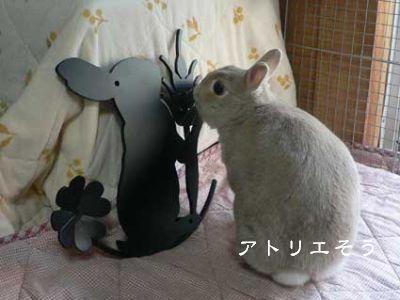 うさぎ+小麦+クローバー妻飾りのモデルになった【こむぎちゃん】