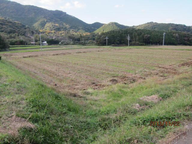 刈り取り後の大豆圃場