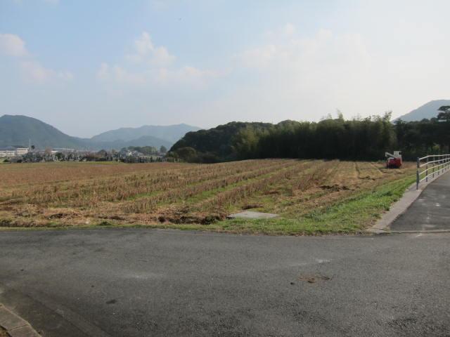 国道下の大豆畑