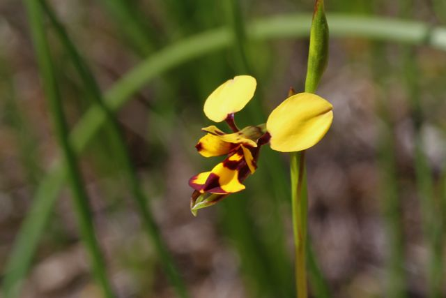 8:19BeeOrchid