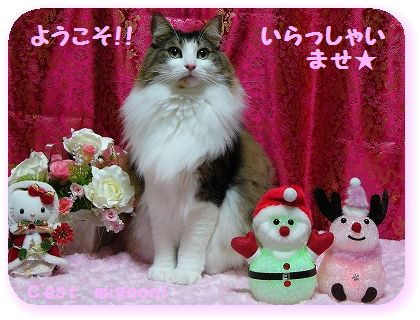 2-10クリスマスいらっしゃい1150222
