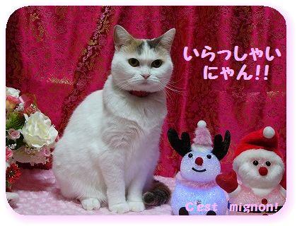 2-10クリスマスいらっしゃい1150374