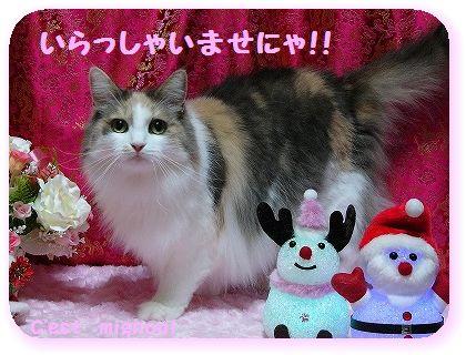 2-10クリスマスいらっしゃい1150380