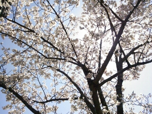 PhotoHenshu_20120406211505.jpg