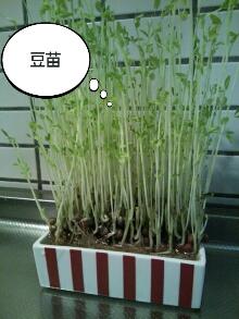 PhotoHenshu_20120813101811.jpg