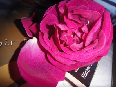 2010_1225_バラの花