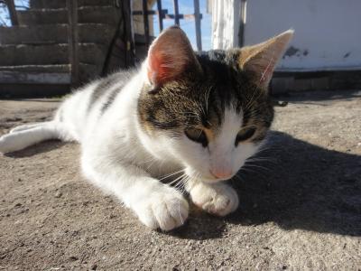 2010_1221_猫④