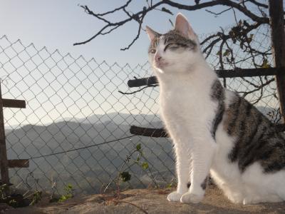 2010_1222_猫①