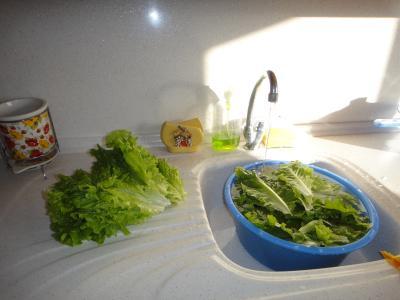 2010_1128_サラダ洗う