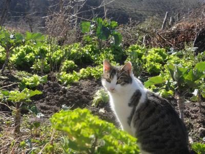 2011_0209_猫2
