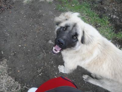2011_0214_犬2