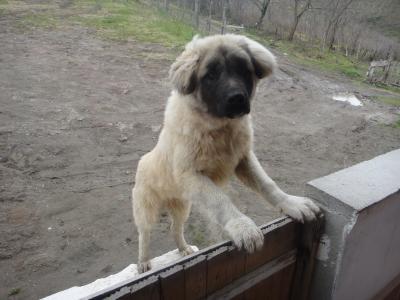 2011_0214_犬1